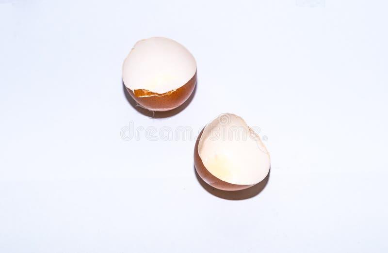 Eggshell aislado en el fondo blanco foto de archivo