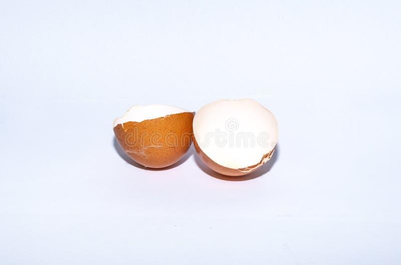 Eggshell aislado en el fondo blanco fotos de archivo libres de regalías