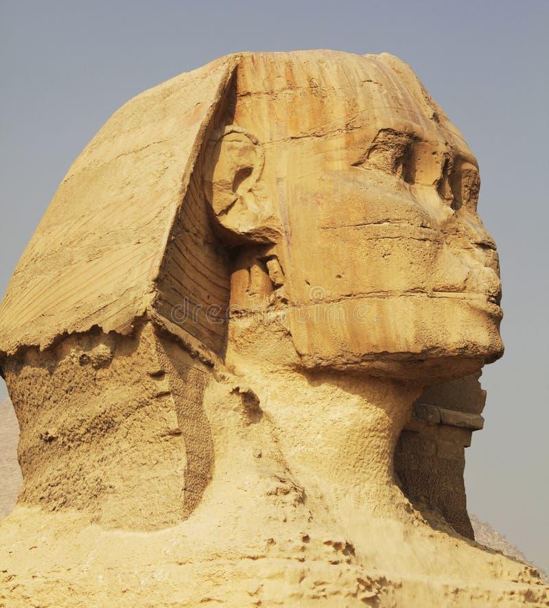 egipski sphynx fotografia stock
