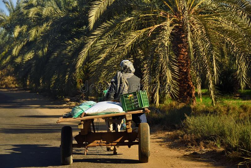 Egipskie chłop przejażdżki w furze fotografia stock