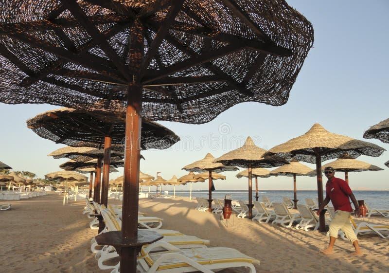 Egipto: Playa equipada de los ociosos y de los paraguas del sol - temprano por la mañana, en la salida del sol imagen de archivo libre de regalías
