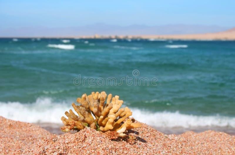 Egipto. Praia no encanto uma cerveja inglesa o Sheikh fotografia de stock