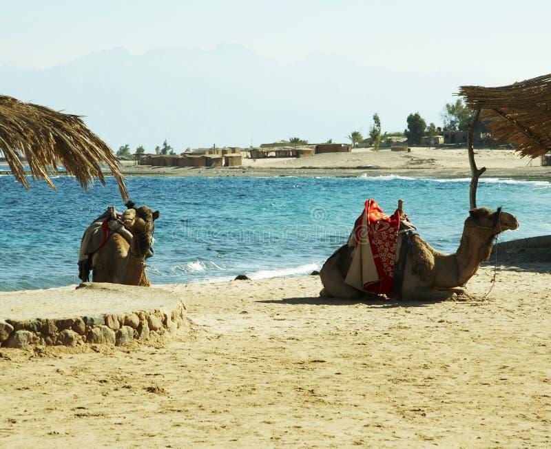 egiptu obraz stock