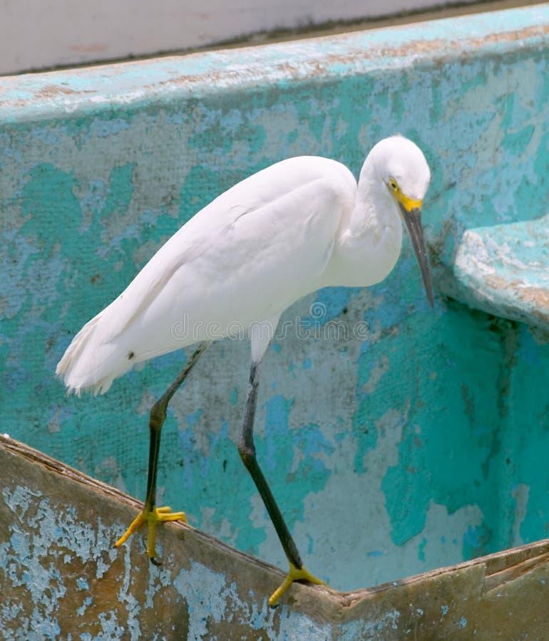 egret śnieg zdjęcia stock