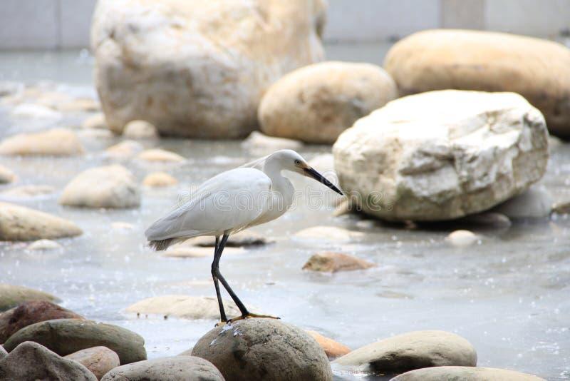 Egret под мостом стоковые фотографии rf