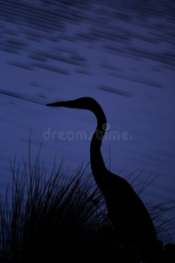 Download Egret stock image. Image of egret, silhouette, fishing - 230763