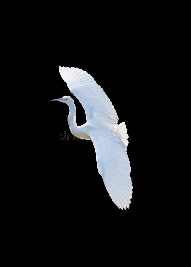 egret royaltyfri foto