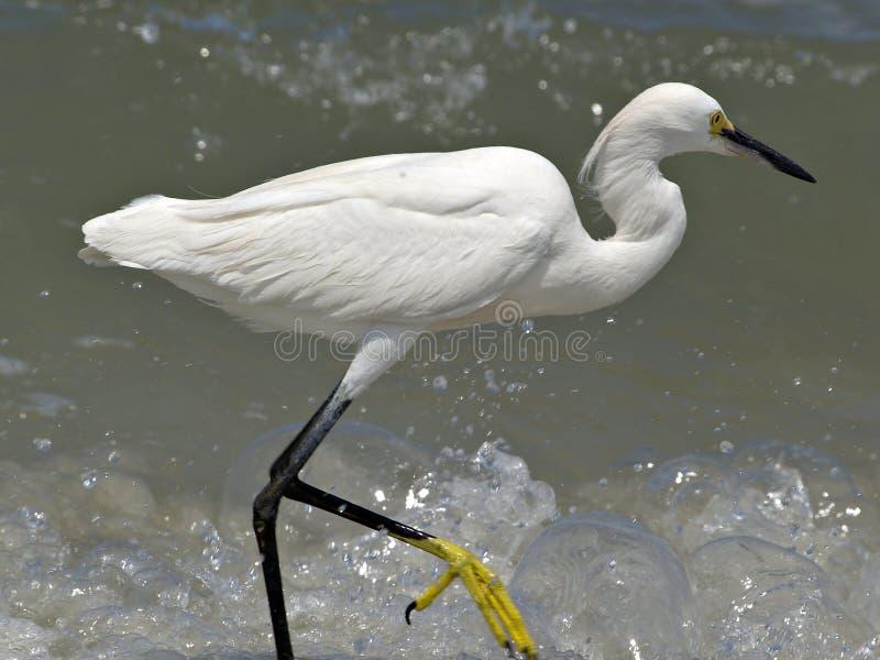Egret imagen de archivo libre de regalías