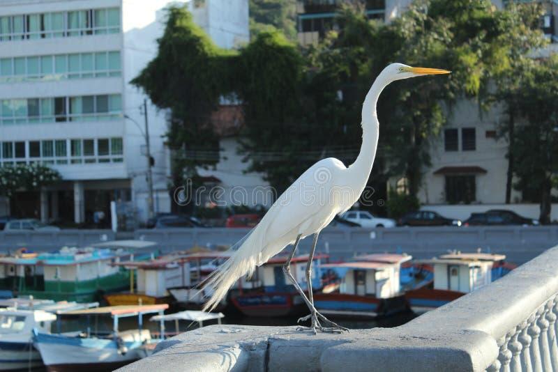 egret foto de stock
