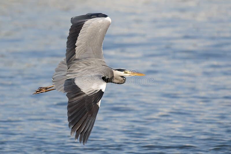 egret arkivbilder
