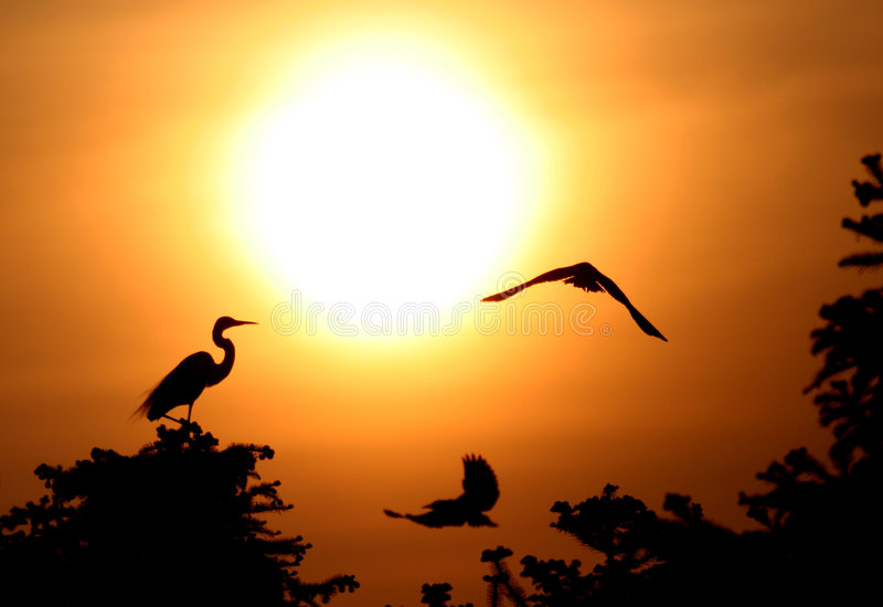 Egret angel stock photography