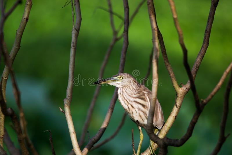 A beautiful Egret sitting on a tree branch stock photography