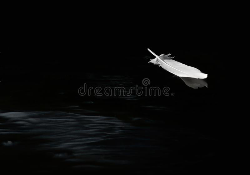 Egret feather floating on calm water. Egret feather floating on calm water in black and white stock photo