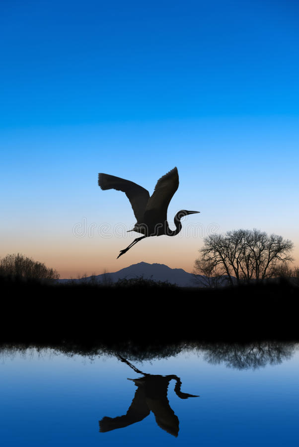 Free Egret Flying On Blue Evening Royalty Free Stock Photography - 23282257