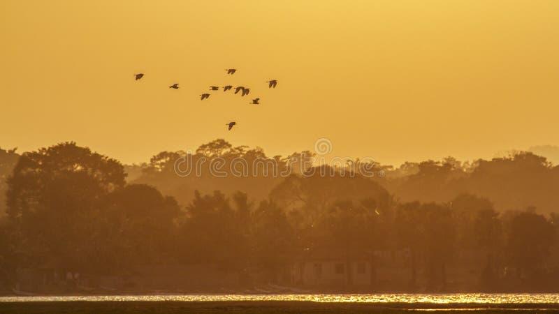 Egret pequeno na lagoa da baía de Arugam, Sri Lanka imagem de stock royalty free