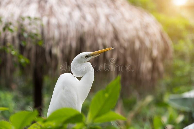 Egret pobyt w drzewie obrazy stock