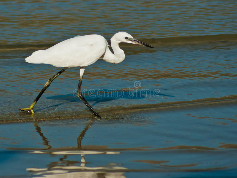 Egret On Sea Shore Stock Images