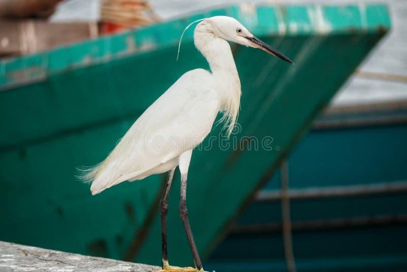 Egret stock images