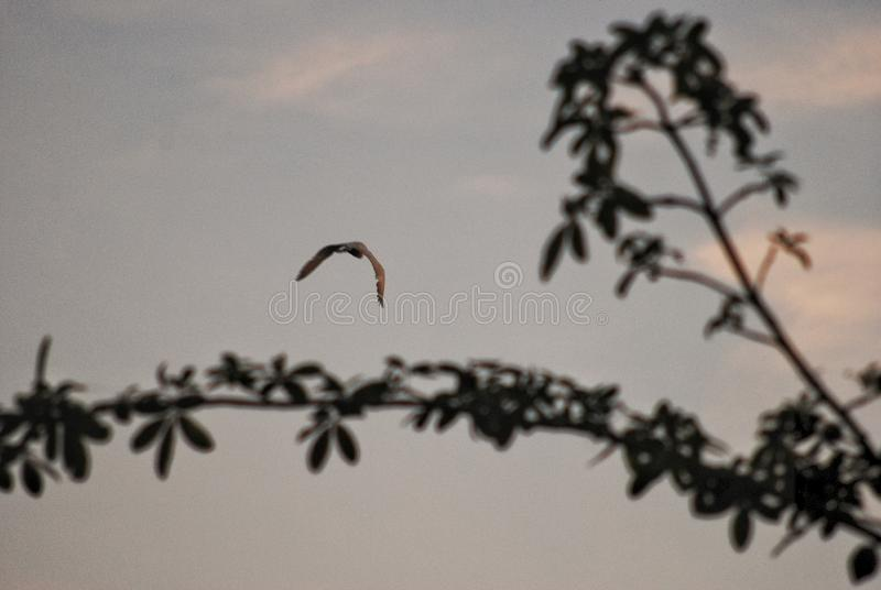 Egret in the sunset setting for home. royalty free stock photography