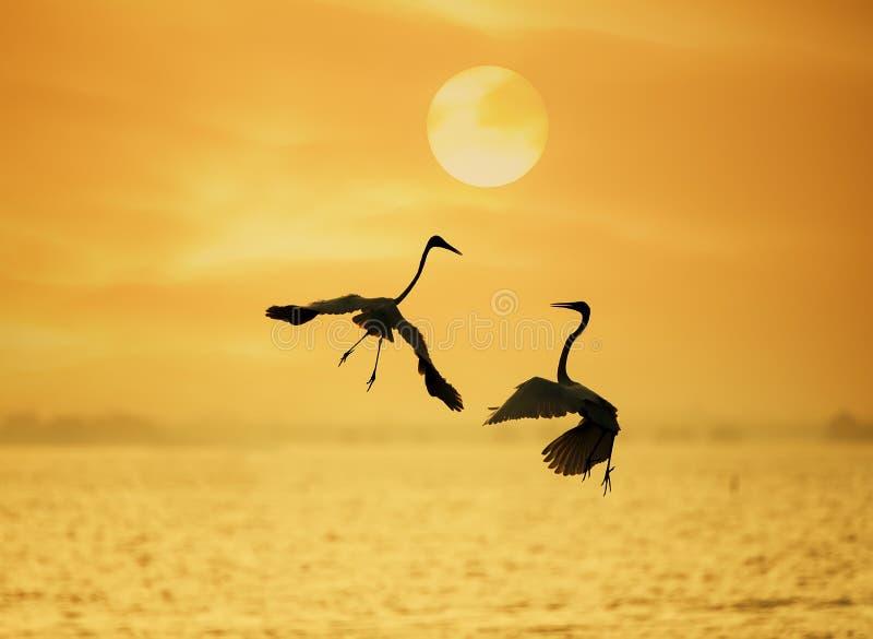 Egret sztuka w wody ziemi obrazy stock