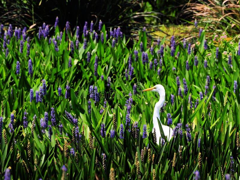 Egret y flor imagen de archivo libre de regalías