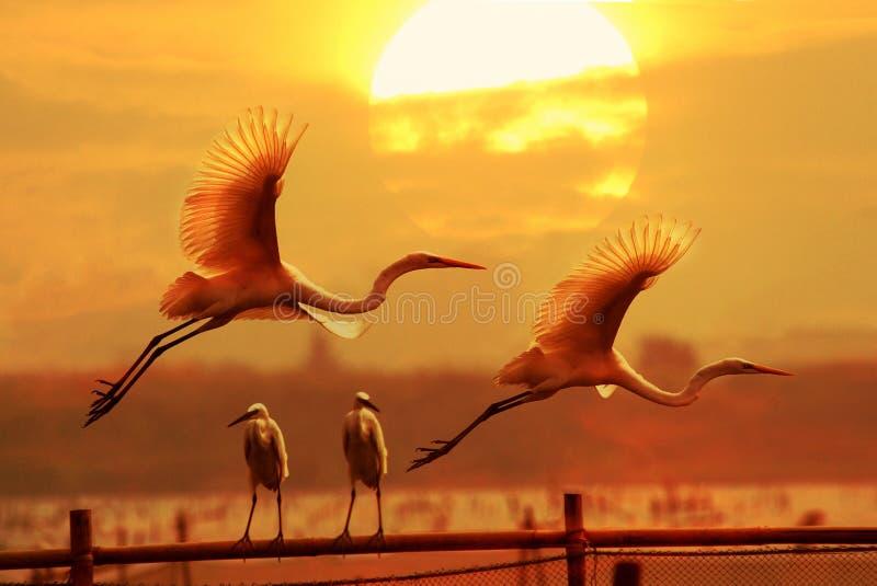 Egrets imágenes de archivo libres de regalías