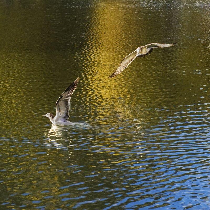 Egrets fly freely around the Potala Palace stock photos