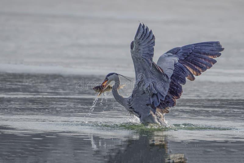 Egrets i czaple zdjęcie royalty free