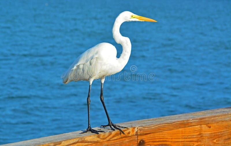Egretta sul pilastro della spiaggia fotografie stock