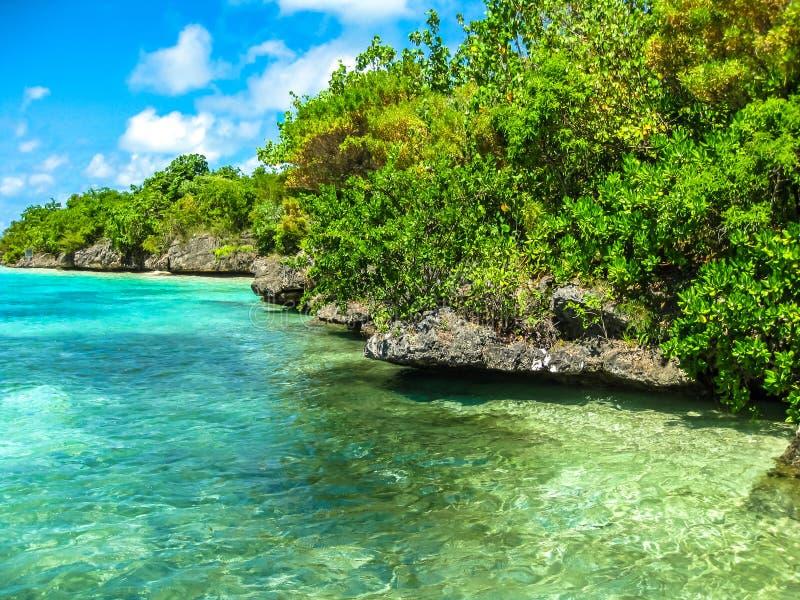 Egrety wyspa Mauritius obrazy royalty free