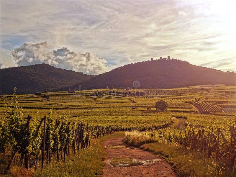 Eguishem Wineyard royaltyfria foton