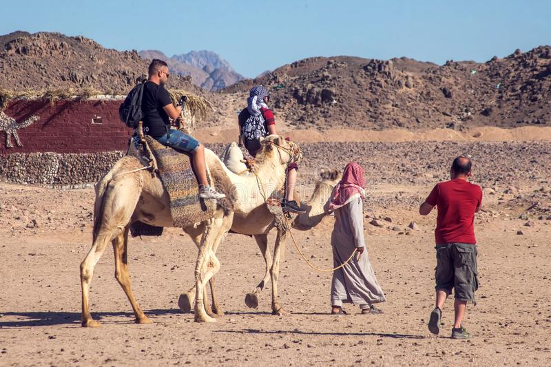 Egypt, Hurghada, 12 may 2019, beduins and tourits ride a camels in the desert stock image