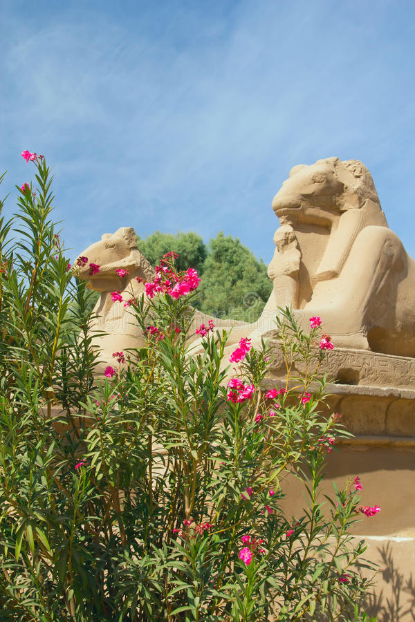egypt karnak taranuje statuy świątynne zdjęcia stock