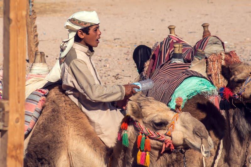 Egypte, Hurghada, 12 kan 2019, beduins en tourits rit kamelen in de woestijn royalty-vrije stock afbeelding