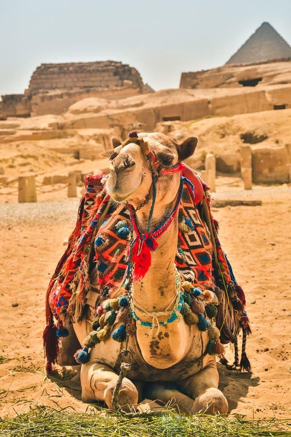Egypten Kairo; Augusti 19, 2014 - de egyptiska pyramiderna i Kairo arkivfoto