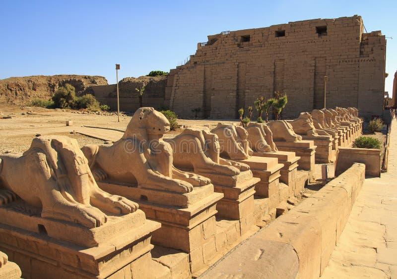 Egypten pharaohsna, Karnak tempelkomplex Luxor fotografering för bildbyråer