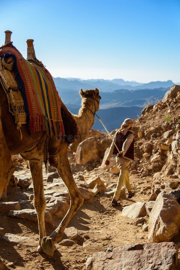 Egypten Sinai, montering Moses Väg som vallfärdar på klättring berget av Moses och beduinen med kamlet på vägen arkivfoton