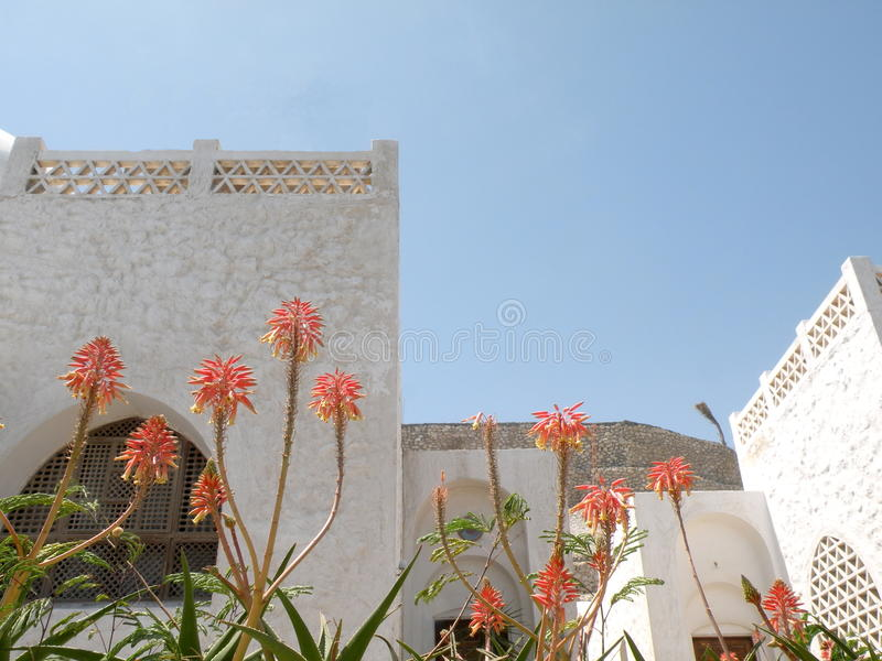Egyptian architecture. White egyptian architecture and blooming cactus royalty free stock photography