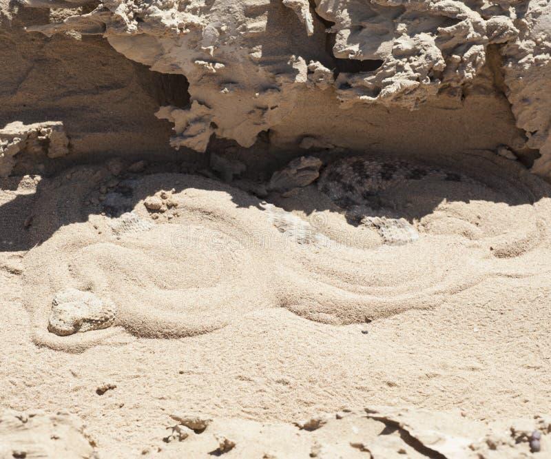 Egyptian Desert Viper Snake In The Sand Stock Photo Image 39585027