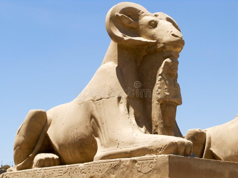Egyptian ram stock photos