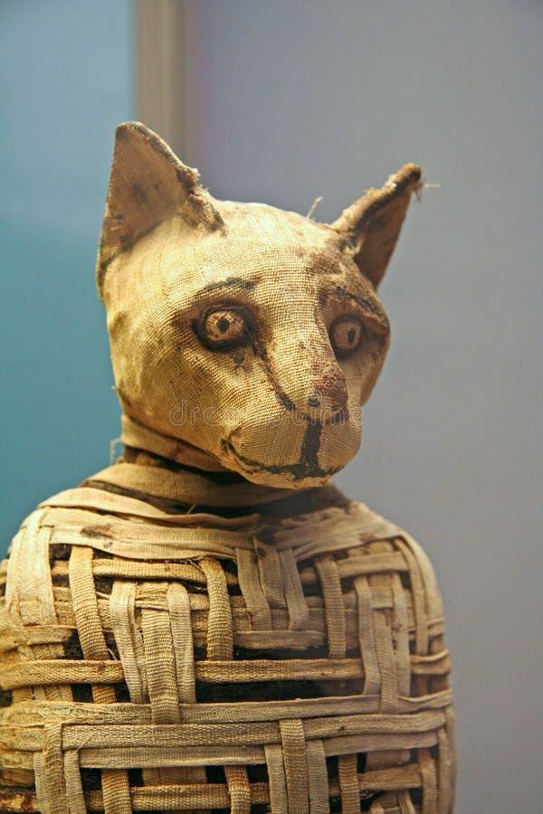 Egyptische Cat Mummy royalty-vrije stock fotografie