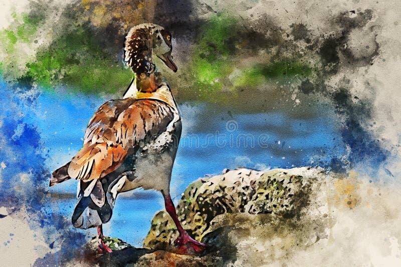 Egyptische gans of Alopochen-aegyptiacus in Kenia vector illustratie