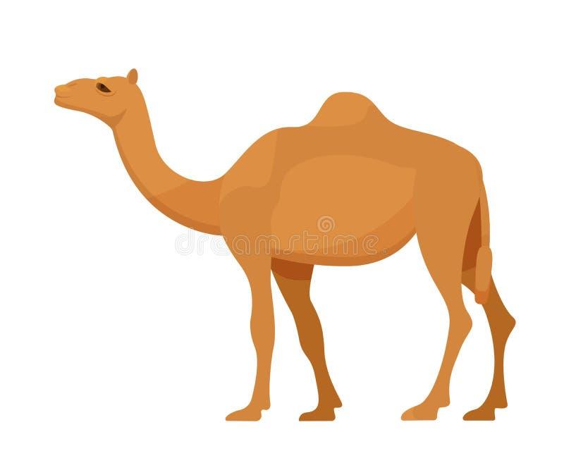 Egyptische kameel in de volledige groei Zoogdier, kameel, dier met hoeven stock illustratie