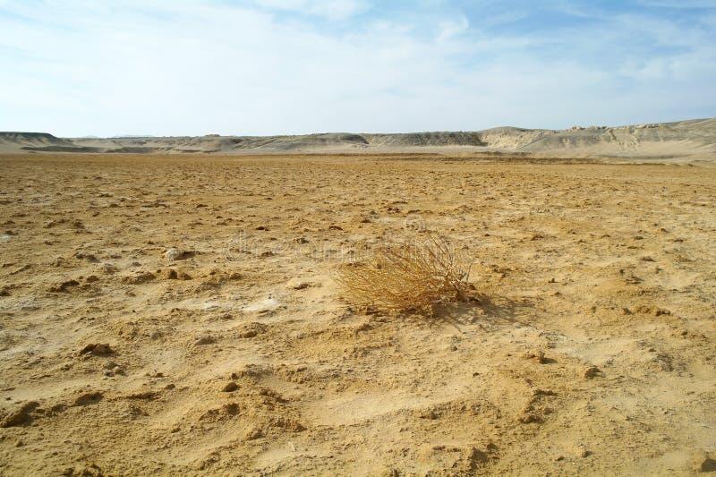 Egyptisk öken och blå himmel arkivbilder