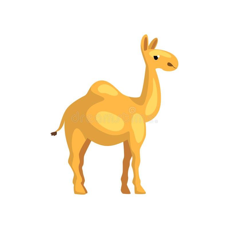 Egyptisk kamel Tecknad filmtecken av ökendjuret Varelse med knölen på dess baksida Grafisk beståndsdel för promoaffisch av royaltyfri illustrationer