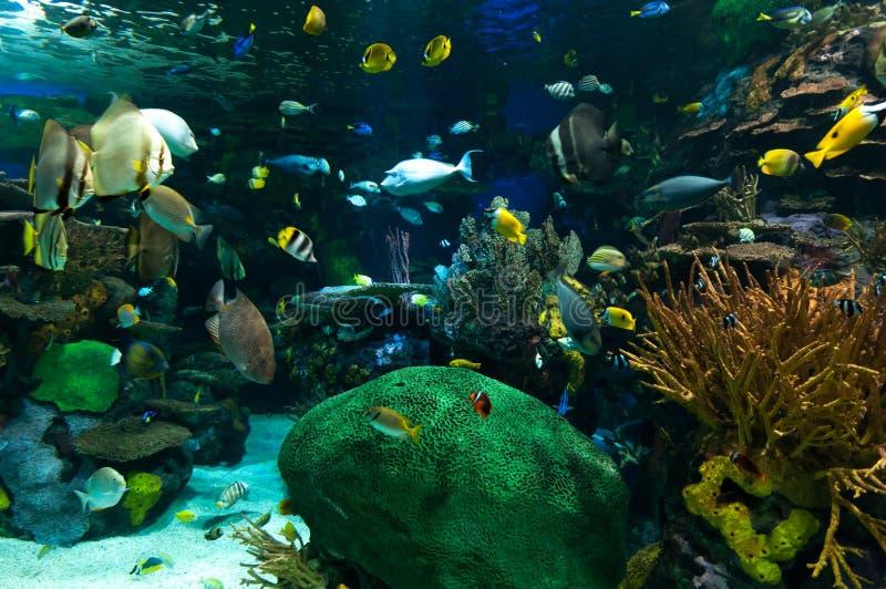 Egzot ryba w akwarium zdjęcie stock