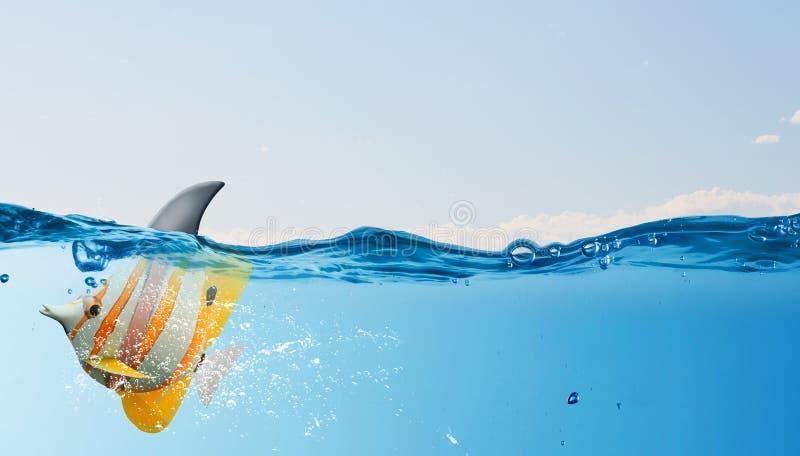 Egzot ryba z rekinu trzepnięciem zdjęcie stock