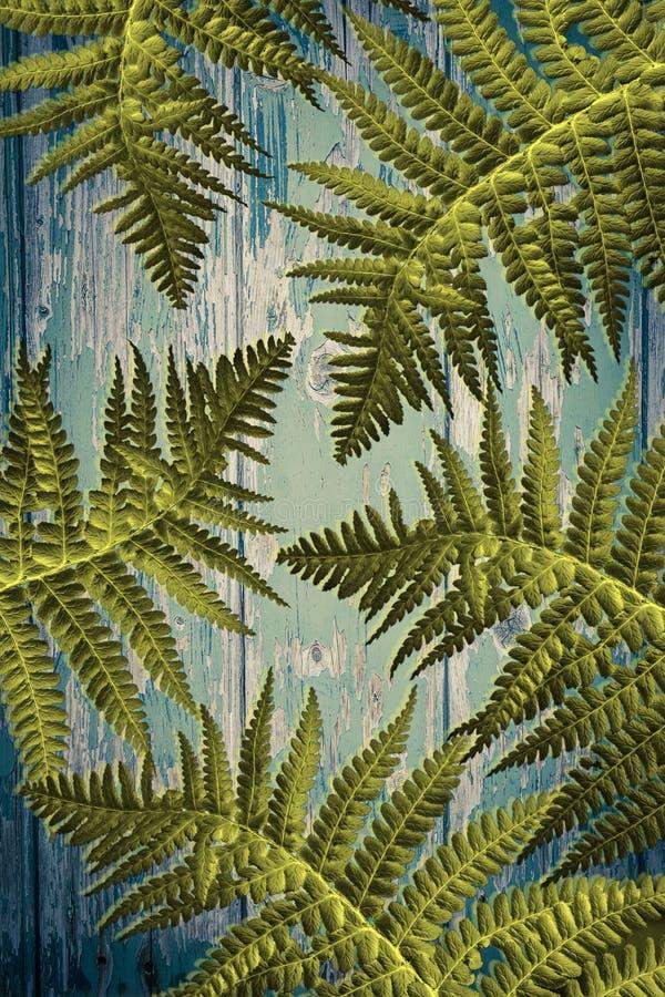 Egzot zasadza drewnianego tło z paprociowymi liśćmi obraz stock