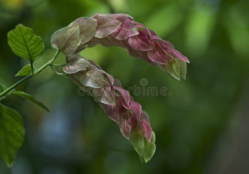 Egzot zieleni i menchii kwiat obrazy royalty free