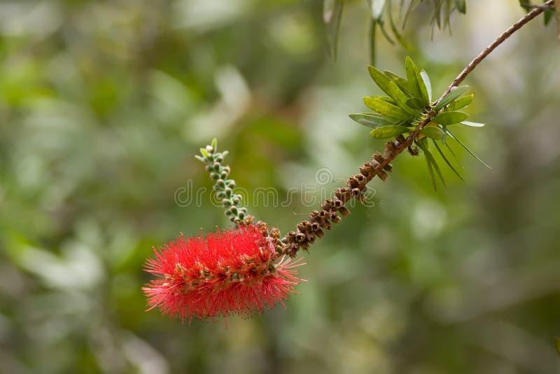 egzota kwiat zdjęcia royalty free